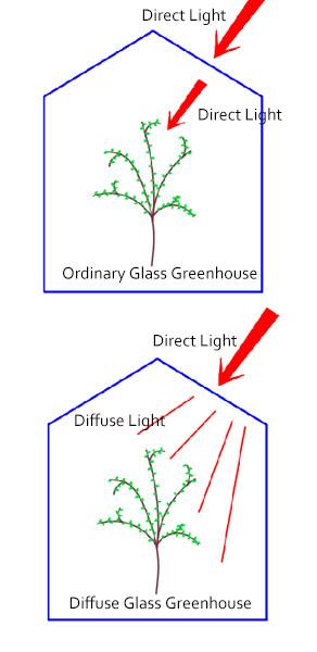 diffuse glass greenhouse