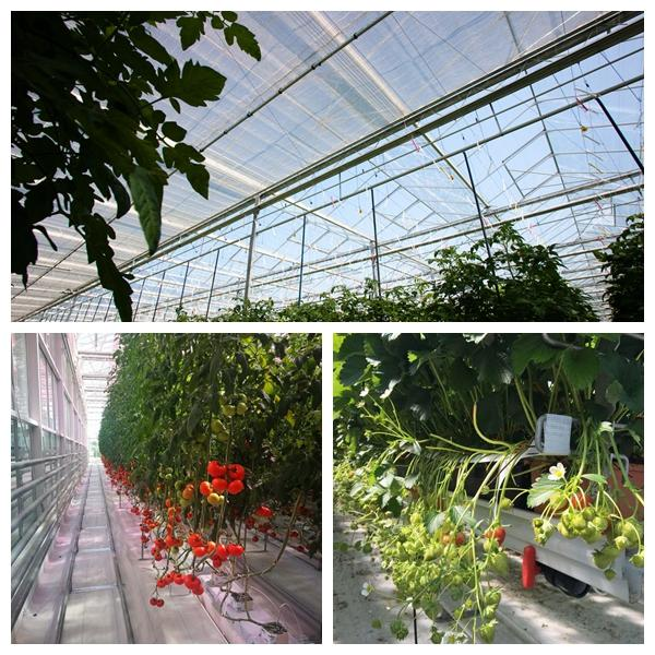 how much does it cost to build a commercial greenhouse