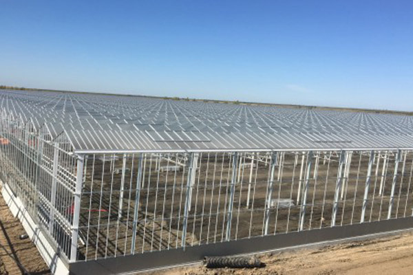 Haisheng Group 18ha pepper and tomato greenhouse